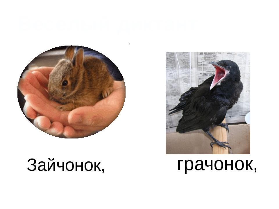 Зайчонок, грачонок, Веселый диктант