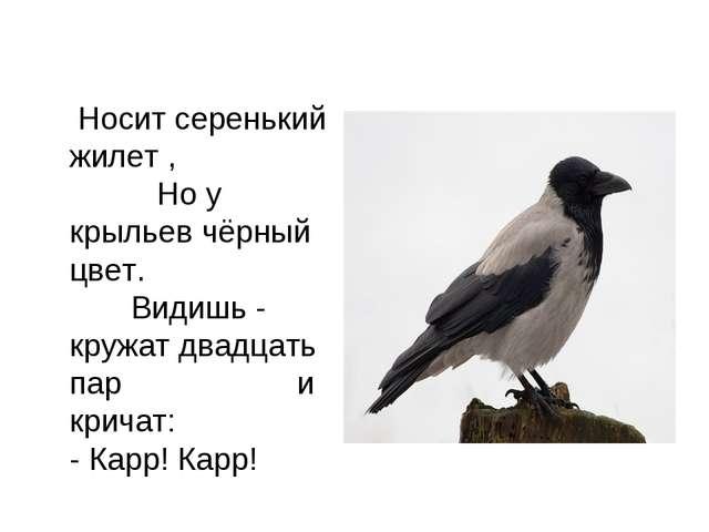 Носит серенький жилет , Но у крыльев чёрный цвет. Видишь - кружат двадцать п...