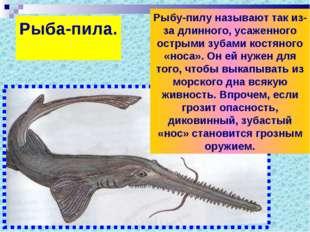 Рыба-пила. Рыбу-пилу называют так из-за длинного, усаженного острыми зубами к