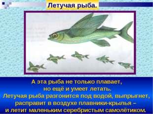 А эта рыба не только плавает, но ещё и умеет летать. Летучая рыба разгонится
