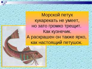Морской петух кукарекать не умеет, но зато громко трещит. Как кузнечик. А рас