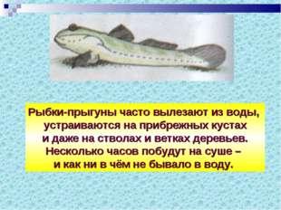 Рыбки-прыгуны часто вылезают из воды, устраиваются на прибрежных кустах и даж