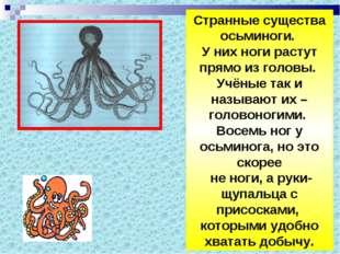 Странные существа осьминоги. У них ноги растут прямо из головы. Учёные так и