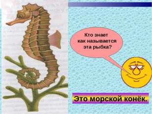 Кто знает как называется эта рыбка? Это морской конёк.