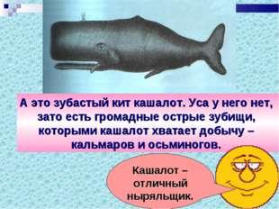 А это зубастый кит кашалот. Уса у него нет, зато есть громадные острые зубищи