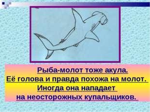 Рыба-молот тоже акула. Её голова и правда похожа на молот. Иногда она напада