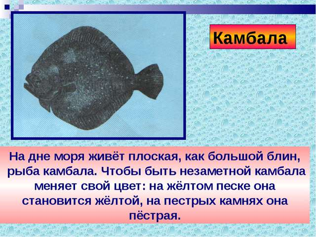 На дне моря живёт плоская, как большой блин, рыба камбала. Чтобы быть незамет...