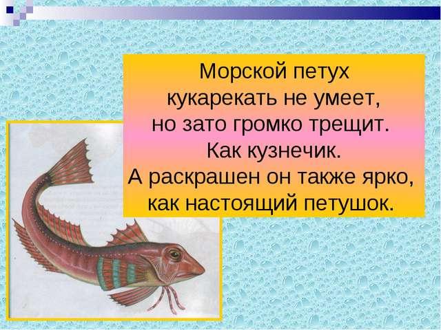 Морской петух кукарекать не умеет, но зато громко трещит. Как кузнечик. А рас...