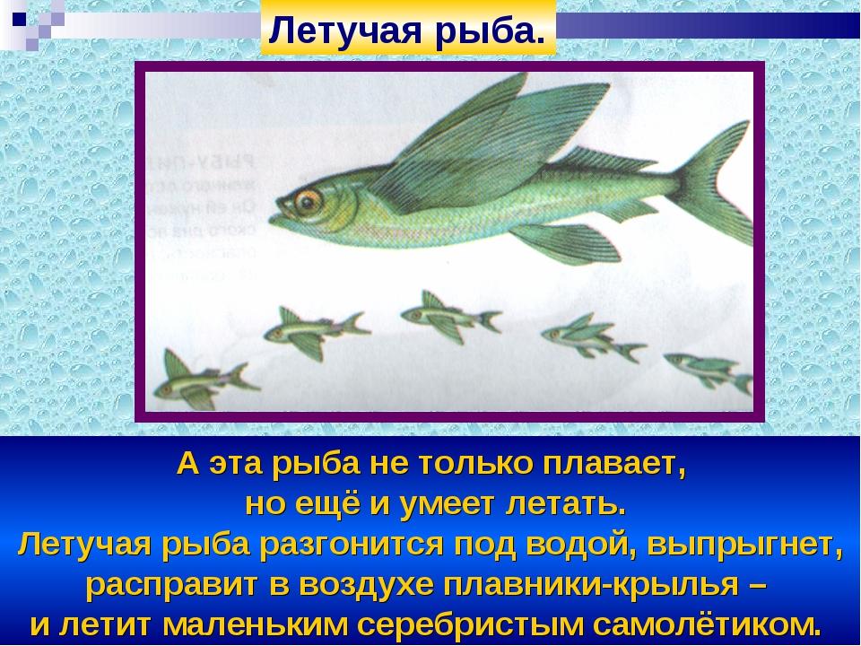 А эта рыба не только плавает, но ещё и умеет летать. Летучая рыба разгонится...