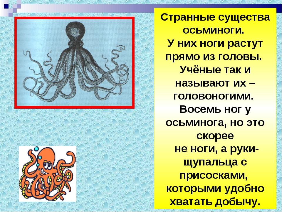 Странные существа осьминоги. У них ноги растут прямо из головы. Учёные так и...
