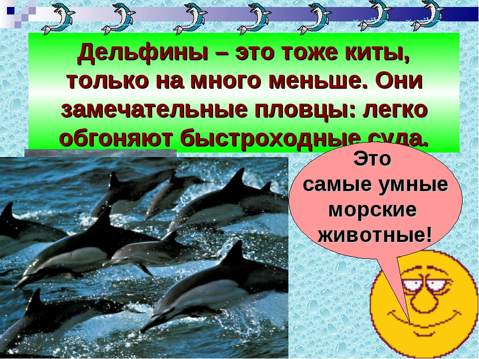 Дельфины – это тоже киты, только на много меньше. Они замечательные пловцы: л...