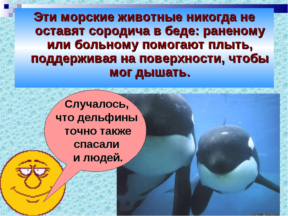 Эти морские животные никогда не оставят сородича в беде: раненому или больном...