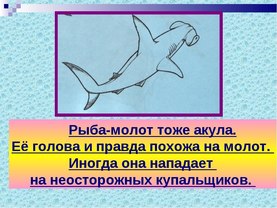 Рыба-молот тоже акула. Её голова и правда похожа на молот. Иногда она напада...