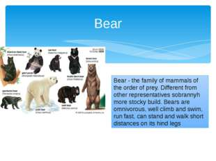 Bear - the family of mammals of the order of prey. Different from other repre