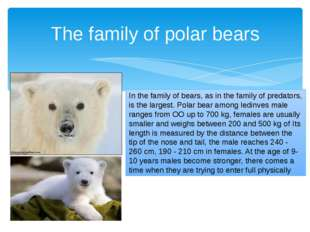 In the family of bears, as in the family of predators, is the largest. Polar