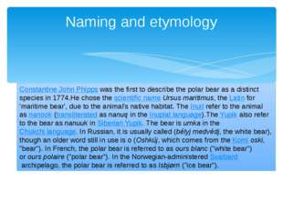 Naming and etymology Constantine John Phippswas the first to describe the po