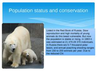 Population status and conservation Listed in the Red Book of Russia. Slow rep