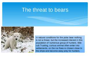 The threat to bears In natural conditions for the polar bear nothing is not a