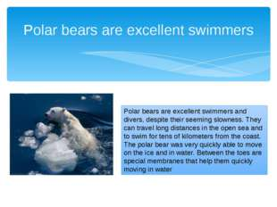 Polar bears are excellent swimmers Polar bears are excellent swimmers and div