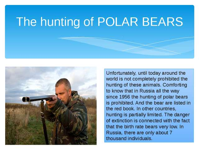 The hunting of POLAR BEARS Unfortunately, until today around the world is not...