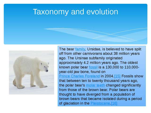 Taxonomy and evolution The bearfamily, Ursidae, is believed to have split of...