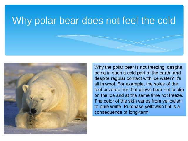Why polar bear does not feel the cold Why the polar bear is not freezing, des...