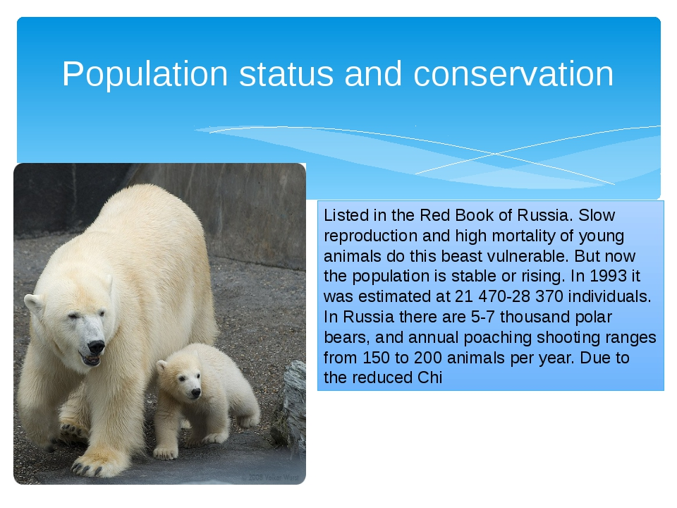 Population status and conservation Listed in the Red Book of Russia. Slow rep...