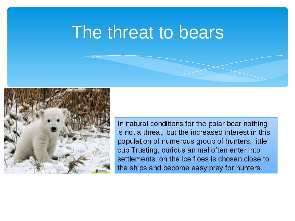 The threat to bears In natural conditions for the polar bear nothing is not a...