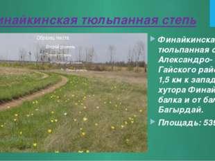 Финайкинская тюльпанная степь Финайкинская тюльпанная степь Александро-Гайско