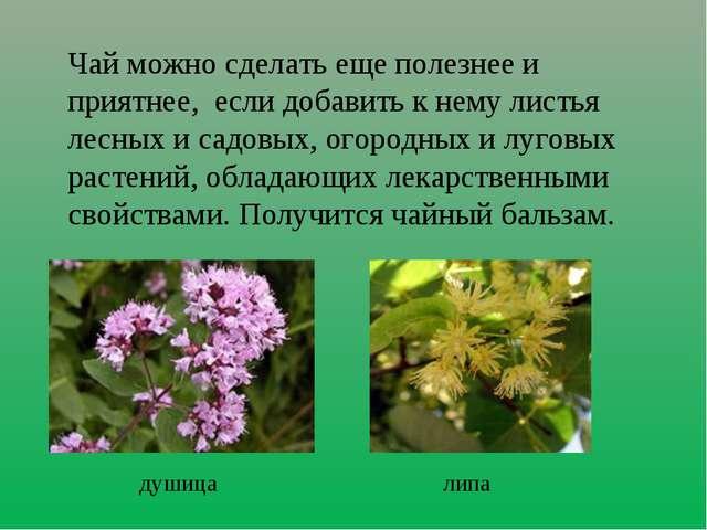 Чай можно сделать еще полезнее и приятнее, если добавить к нему листья лесных...