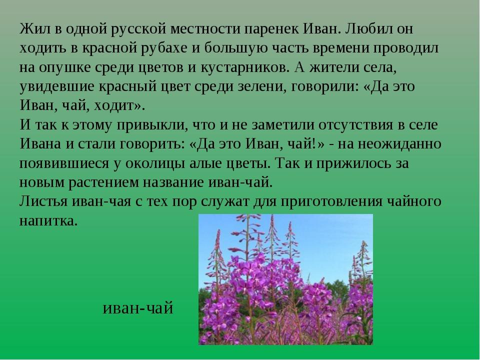 Жил в одной русской местности паренек Иван. Любил он ходить в красной рубахе...
