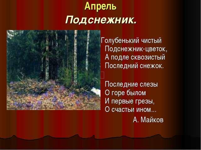 Апрель Подснежник. Голубенький чистый Подснежник-цветок, А подле сквозистый П...