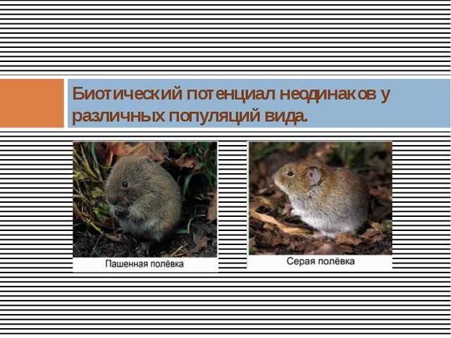 Биотический потенциал неодинаков у различных популяций вида.