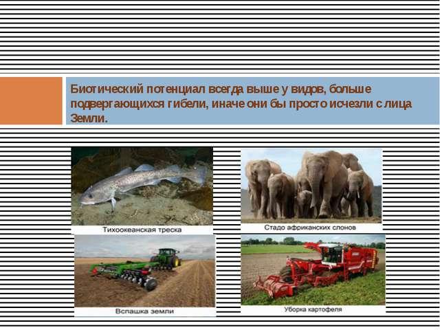 Биотический потенциал всегда выше у видов, больше подвергающихся гибели, ина...