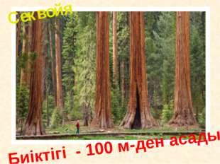 Биіктігі - 100 м-ден асады Секвойя