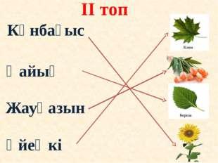 ІІ топ Қайың Үйеңкі Жауқазын Күнбағыс