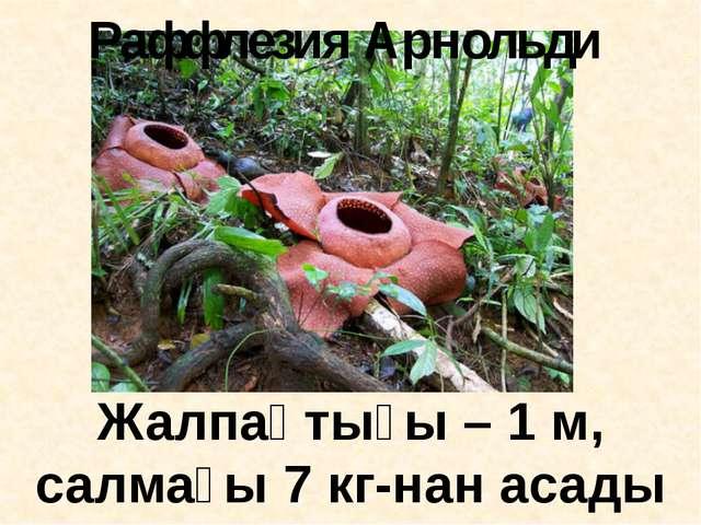 Жалпақтығы – 1 м, салмағы 7 кг-нан асады Раффлезия Арнольди