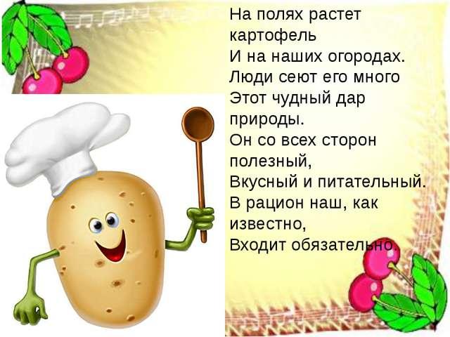 На полях растет картофель И на наших огородах. Люди сеют его много Этот чудны...
