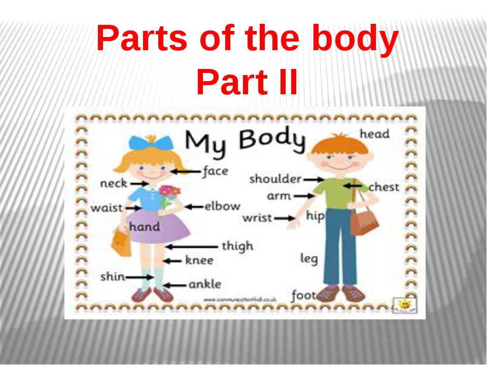 Parts of the body Part ІІ