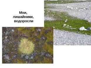 Мхи, лишайники, водоросли