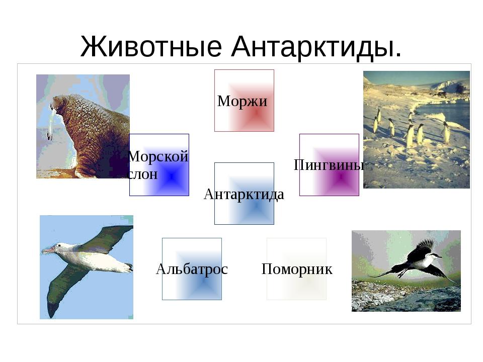 Животные Антарктиды.