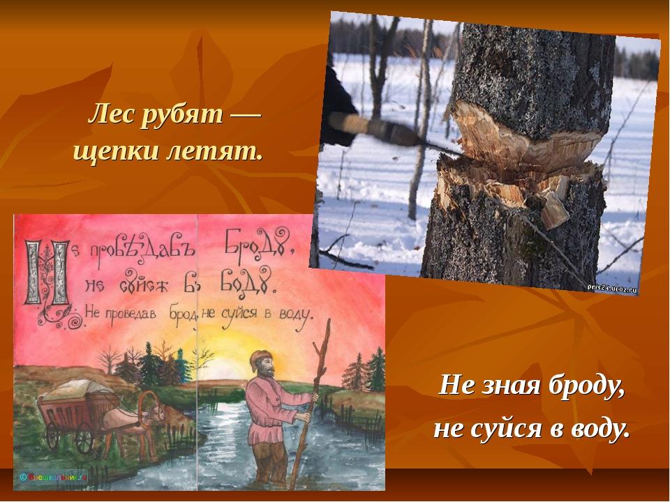Лес рубят — щепки летят. Не зная броду, не суйся в воду.