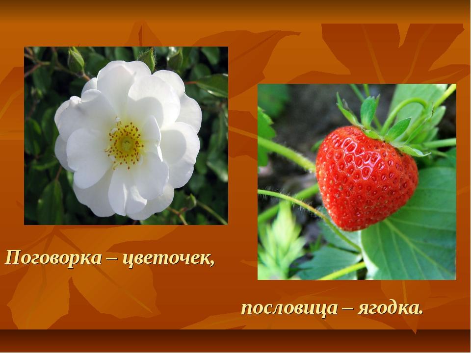 Поговорка – цветочек, пословица – ягодка.