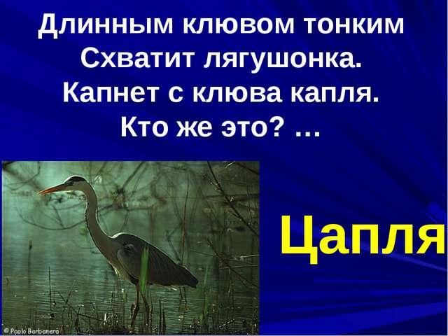 Длинным клювом тонким Схватит лягушонка. Капнет с клюва капля. Кто же это? …...