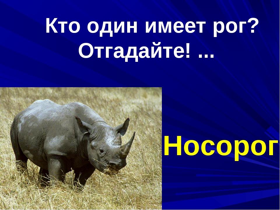 Кто один имеет рог? Отгадайте! ... Носорог