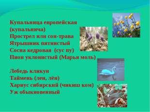 Купальница европейская (купальнича) Прострел или сон-трава Ятрышник пятнистый