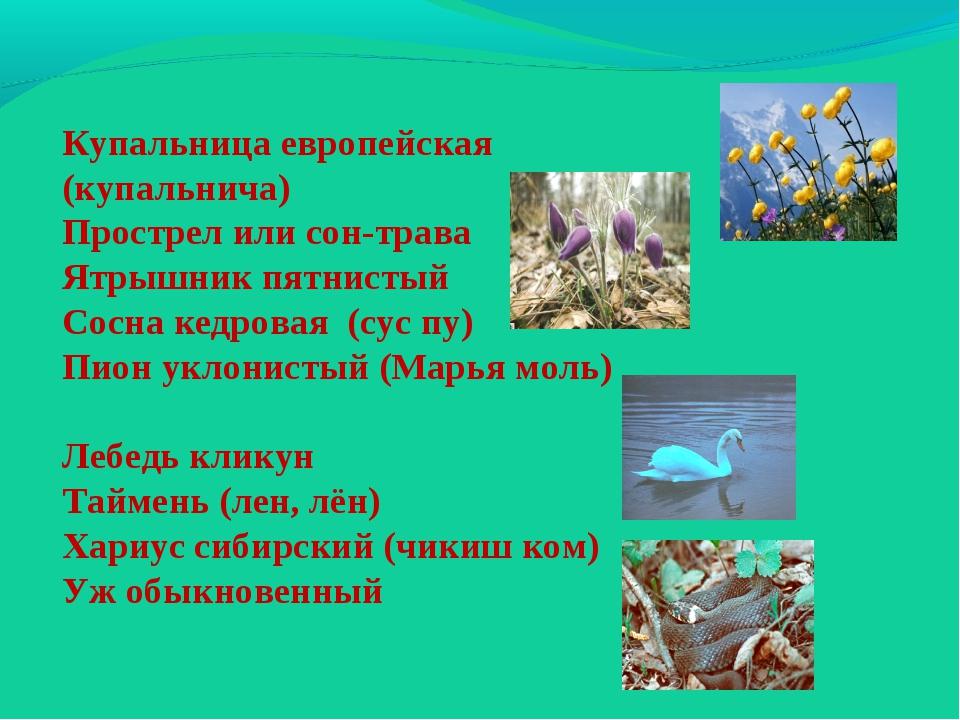 Купальница европейская (купальнича) Прострел или сон-трава Ятрышник пятнистый...