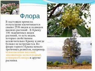 Флора В настоящее время на полуострове насчитывается свыше 2536 видов и подви