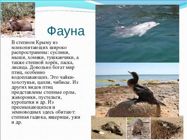 Фауна В степном Крыму из млекопитающих широко распространены: суслики, мыши,...