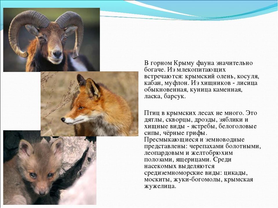 Фауна В горном Крыму фауна значительно богаче. Из млекопитающих встречаются:...